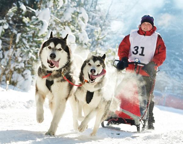 Гонки на собачьих упряжках онлайн гонки для детей 2 года играть онлайн бесплатно на русском