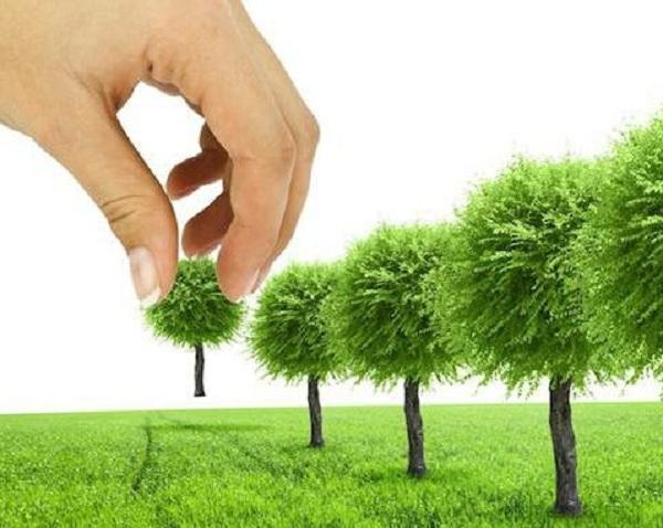 Где нужны деревья?