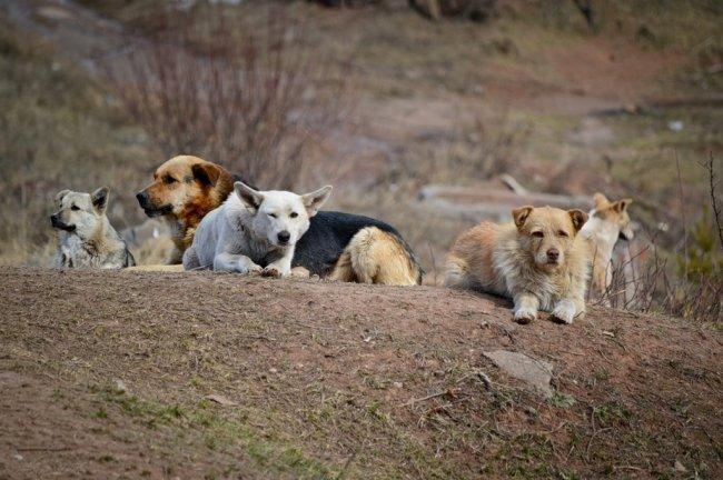 В Магнитке собираются усыпить почти 1 000 собак