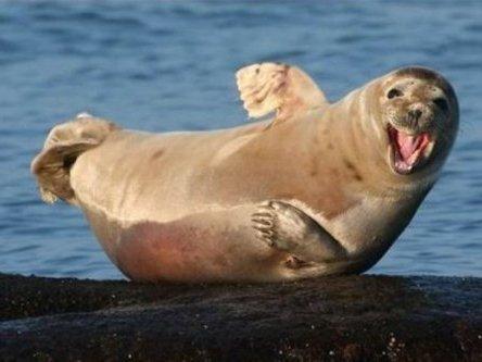 В Магнитогорск прибыли морские котики