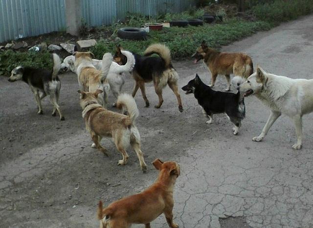 Собаки облюбовали детскую площадку