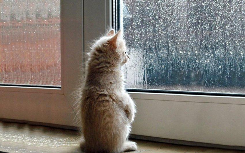 Ливневый дождь всё воскресенье