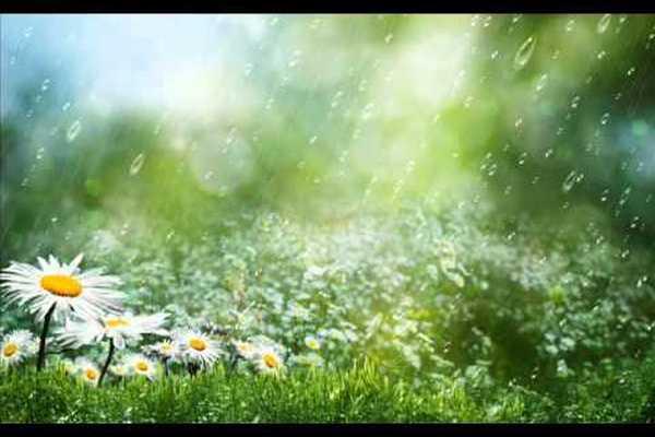 Дожди, ещё раз дожди