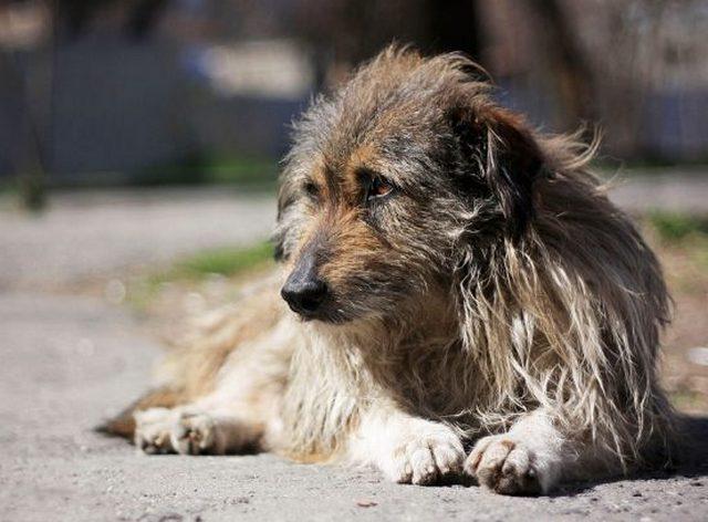 В Магнитогорске догхантеры травят собак