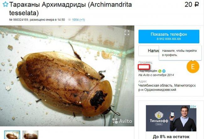 Таракана купить не хотите ли?