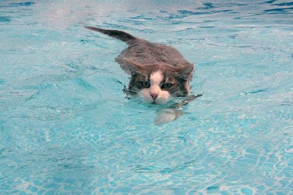 Не купайтесь в одиночку