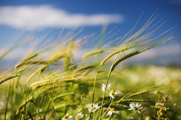 В воскресенье будет ветрено