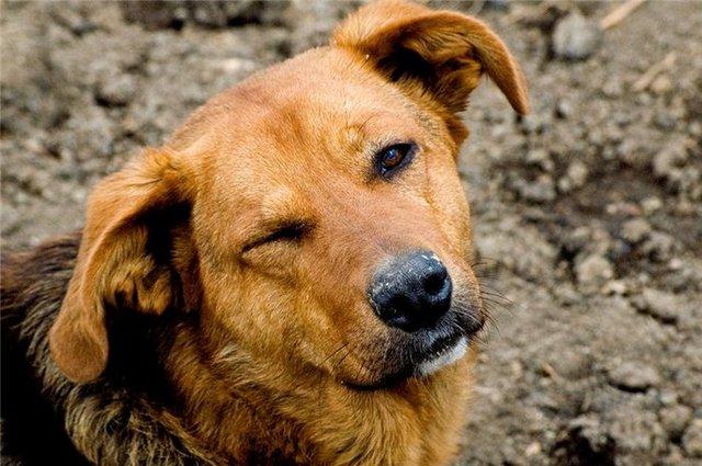 Нашёл бездомную собаку – звони в полицию