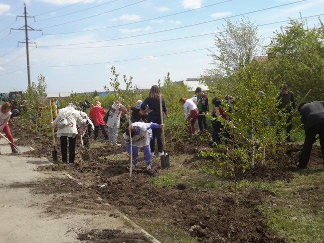 Школы получат тысячу деревьев