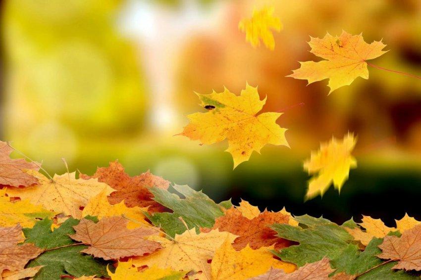 Золотая осень продолжает радовать горожан