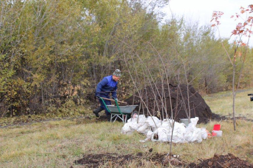 Около тысячи деревьев высадят в Магнитогорске