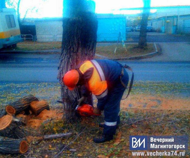 Возле школы деревьев стало меньше