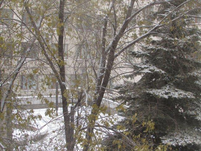 Осторожно, снег!