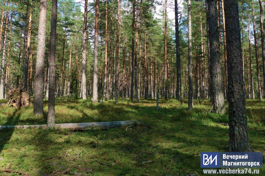 Два лесных участка использовались незаконно