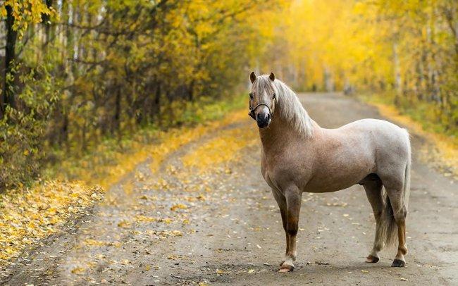 Буйные лошади или циничные хозяева?