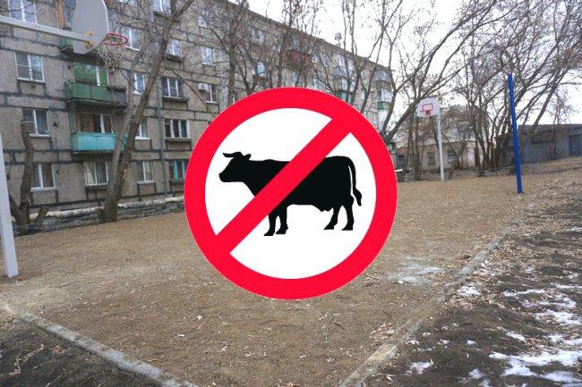 Выгул коров воспрещён!