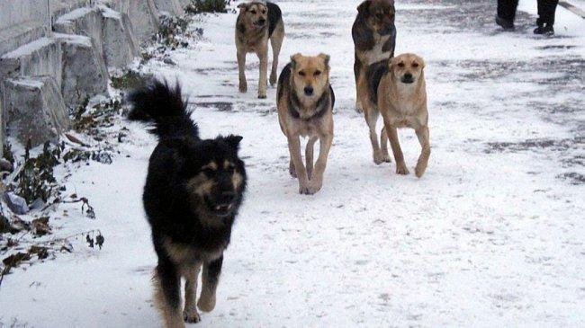 Детей некому защитить от бродячих псов