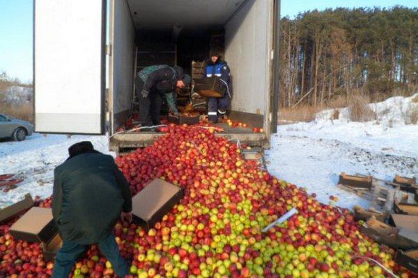 Гусеницы уничтожили две тонны яблок