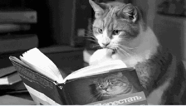 Что вы сейчас читаете?