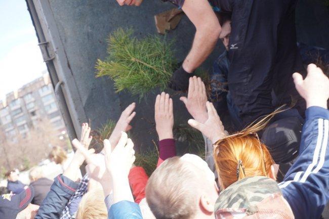 Посадить дерево сможет каждый