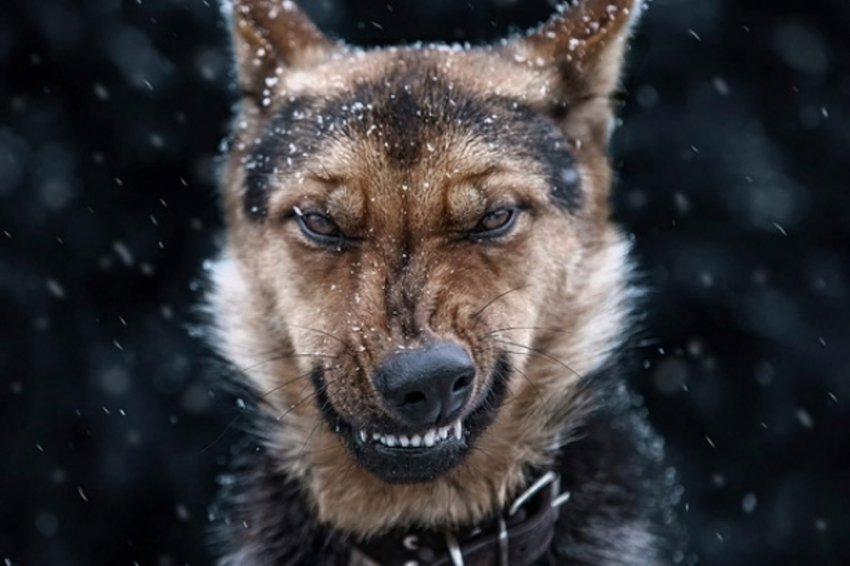Укусила собака – обратитесь к врачу