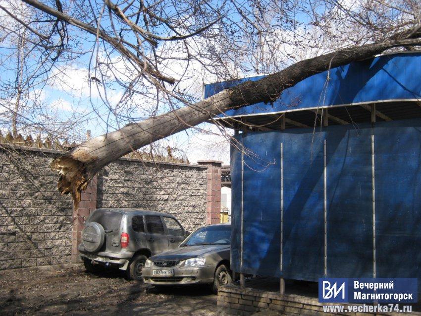 Ураган «сломил» дерево