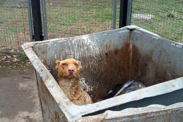 Задержан подозреваемый, отрезавший уши собаке