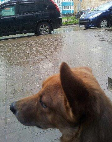 Воспитание собаководов: начало