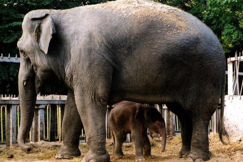 Не обижайте слоников