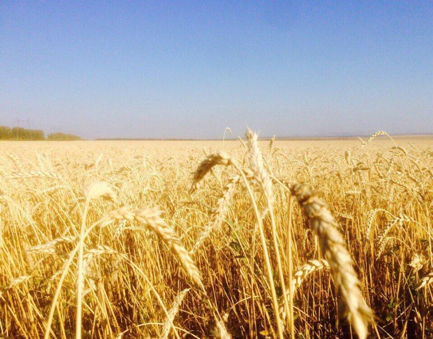 Гроза покажет, какой будет осень
