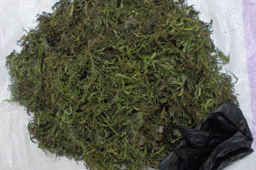 Магнитогорец собрал урожай марихуаны