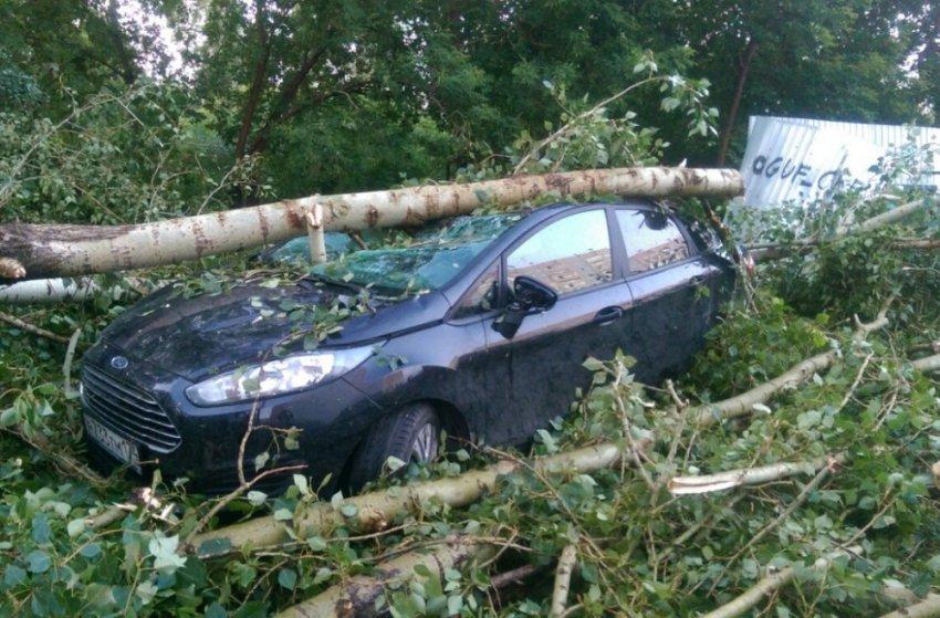 Поваленные деревья, оборванные провода и залитые дороги