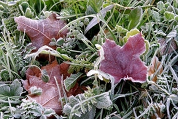 В Магнитогорске ожидаются заморозки
