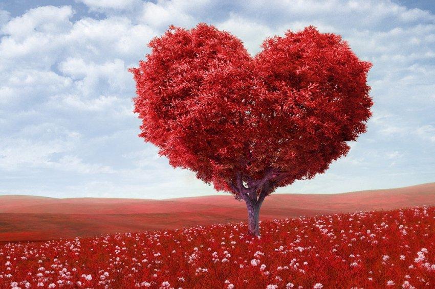 Взрастите дерево любви