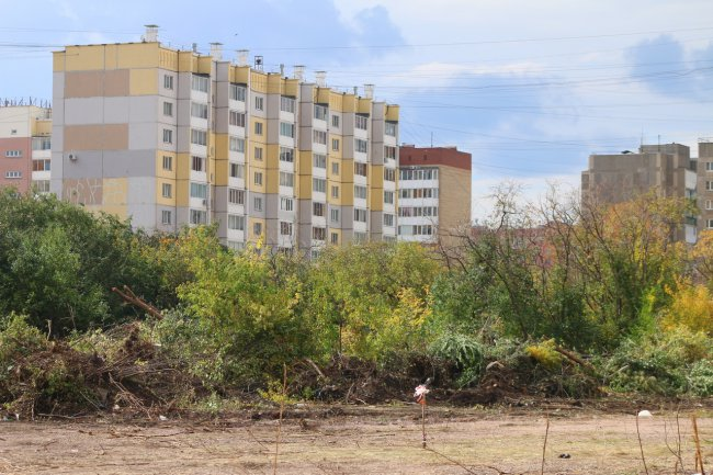 На юге города сносят целый лес