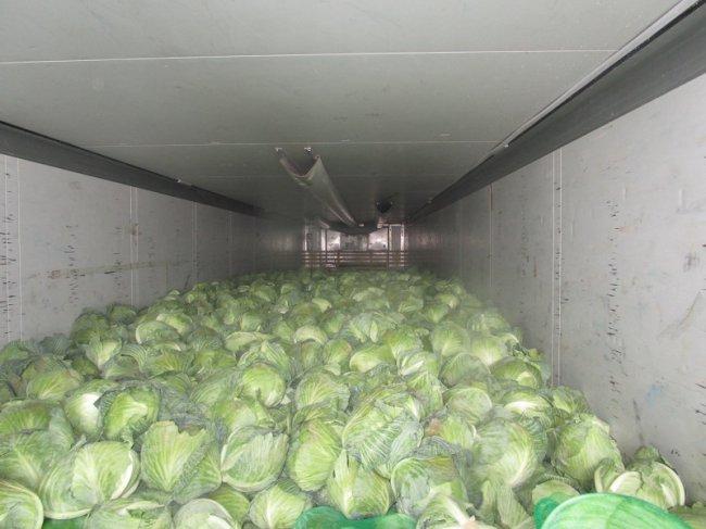 В Челябинскую область не пустили 20 тонн капусты из Киргизии