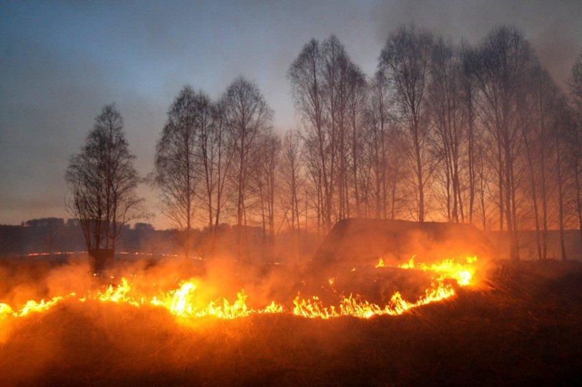 Сжигание сухой травы грозит пожарами