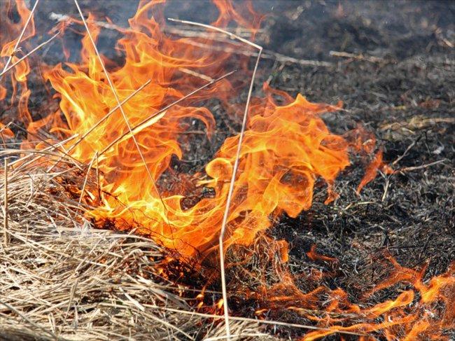 В городе горит мусор и сухая трава