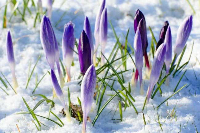 Весна вернётся!