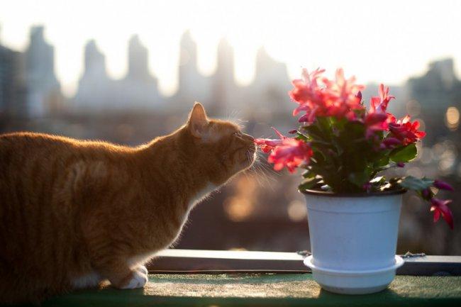За окном солнышко!