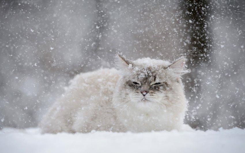 На Урал идут арктические холода