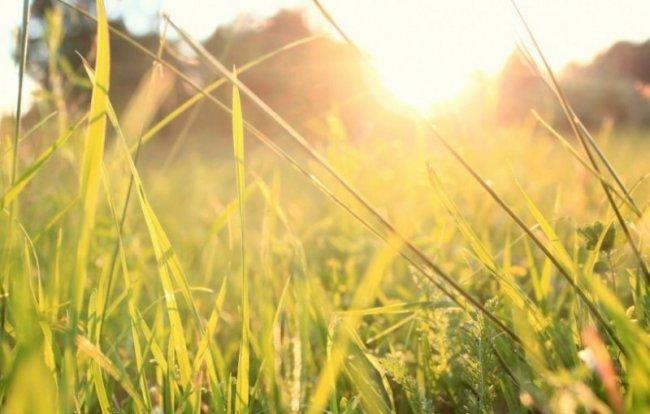 Дождя не будет, только солнце
