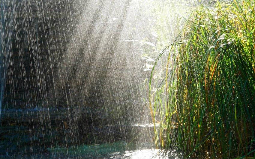 Синоптики вновь обещают дождь