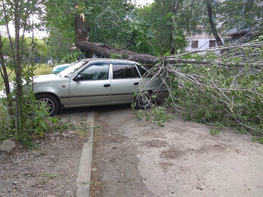 В Магнитогорске на парковку около дома упало дерево