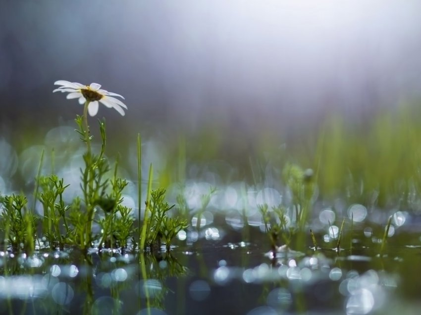 Возможен небольшой дождь