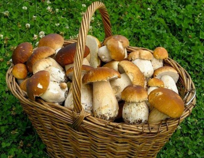 Минсельхоз может взять под контроль сбор ягод и грибов