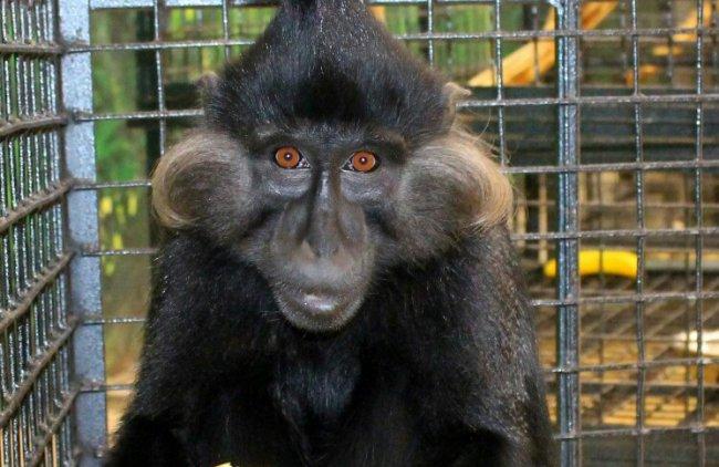 Магнитогорцев ждет нашествие обезьян