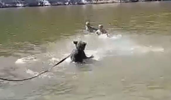 В Урюпинске медведя привели купаться на общественный пляж
