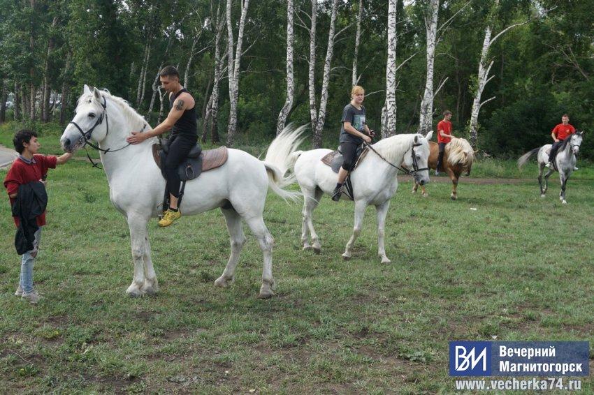 Необычные приключения цирковых коней в Магнитке