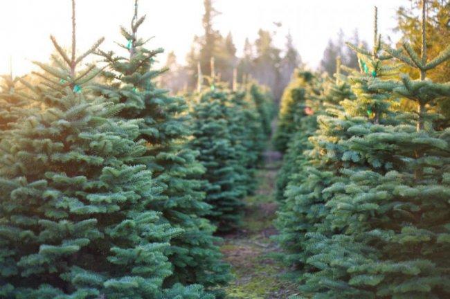 Снесли одно дерево и устроили 9 свалок